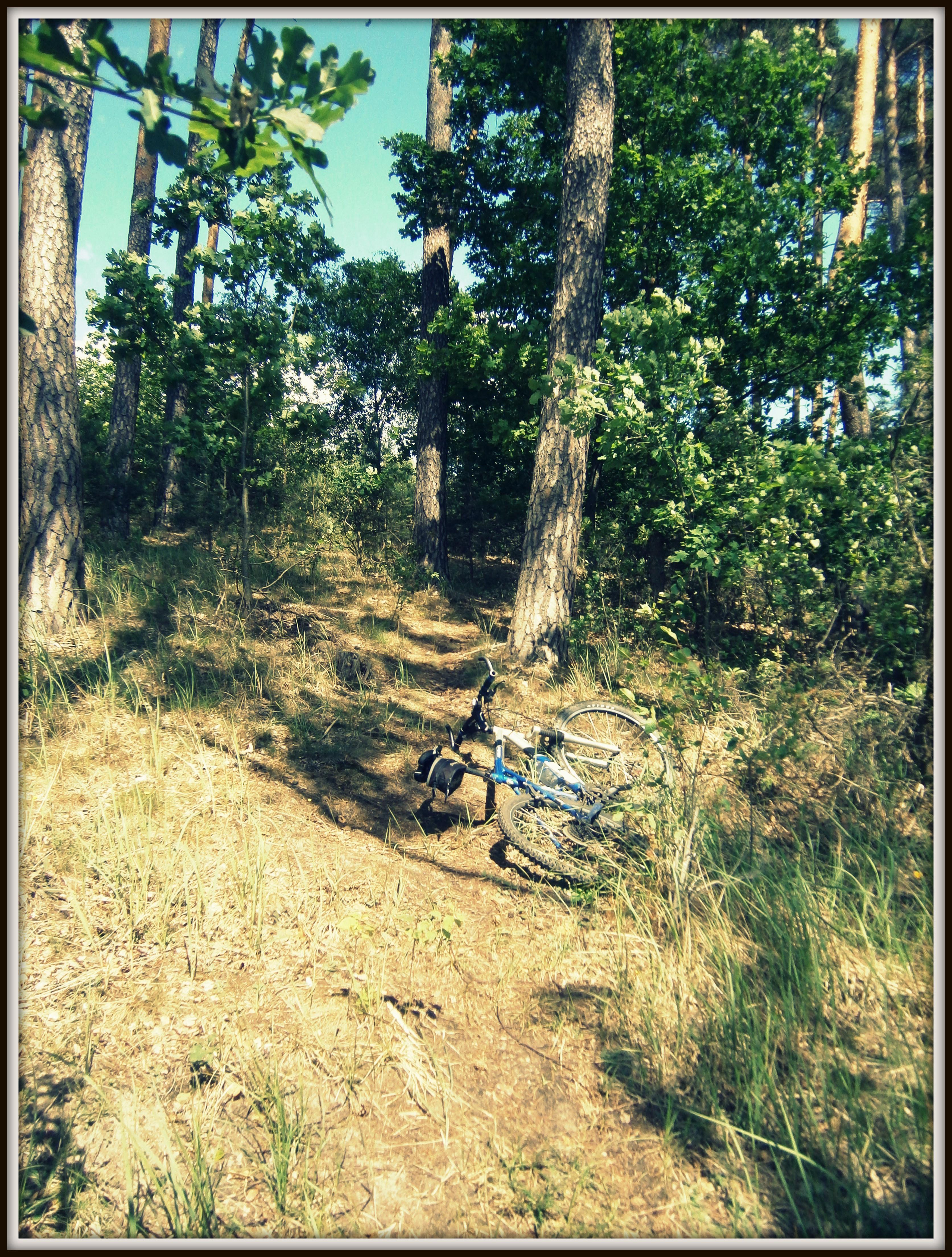 czerwony szlak wokół jeziora Lubiąż = downhill i uphill + zaskroniec gratis